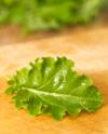Baby_leaf_curly_kale
